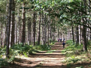 WoodlandtreesBW